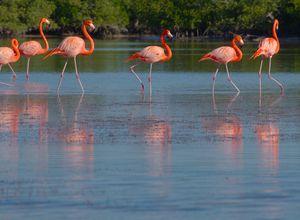 Mexiko-Ria-Lagartos-Flamingos