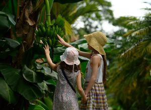 Costa Rica Bananenplantage Kinder iStock 1140394525