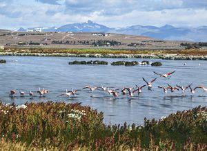 Argentinien Calafate Laguna Nimez Flamingo iStock 956234256