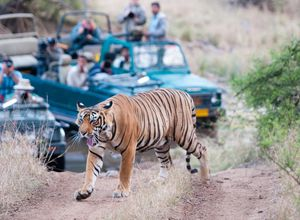 Indien Ranthambore Tiger Nationalpark Safari Jeep spannend