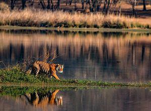 Indien Ranthambore Tiger See Spaziergang Pirsch