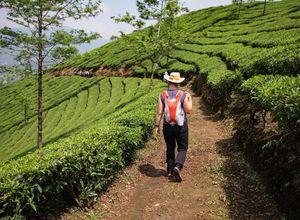 Indien Munnar Gruppenreise Wanderung Wandern Teefeld Plantage