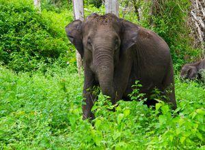 Indien Nationalpark Elefant