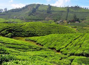 Indien Thekkady Gewuerzplantage Genuss Reise