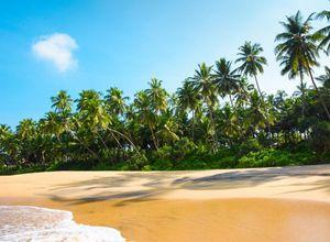 Sri Lanka Mirissa Strand Palmen