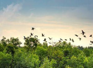 Vietnam Mekong Delta Voegel Besichtigung Beobachtung Naturschutzgebiet