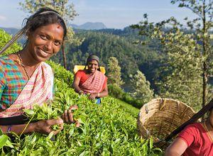 Sri Lanka Teepflückerinnen