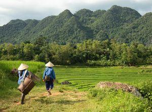 Vietnam Pu Luong Reisfeld Wanderung