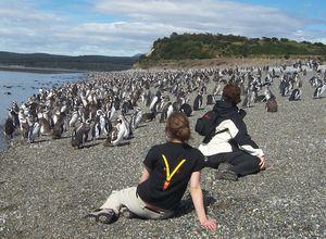 Argentinien Ushuaia Gruppenreise Isla Martillo