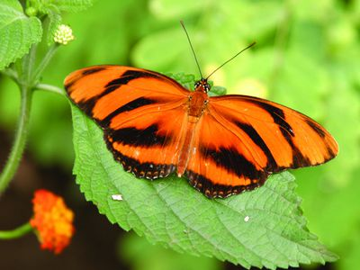 butterfly 2 ZeWwUF0