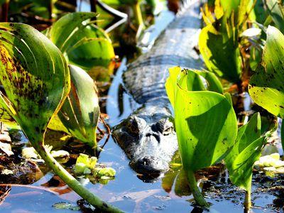 brasilien pantanal2