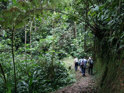 ecuador podocarpus np wanderung