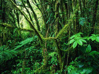costa rica pazifiktour monteverde highlights 4
