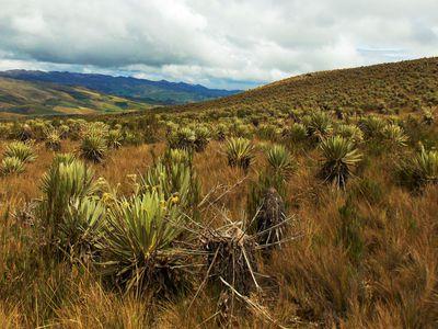 Páramo-Landschaft Cotopaxi Nationalpark, Ecuador