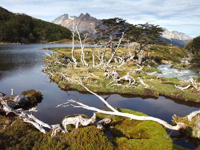 argentinien ushuaia feuerland nationalpark landschaft wald