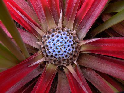 Chile Seengebiet Blume