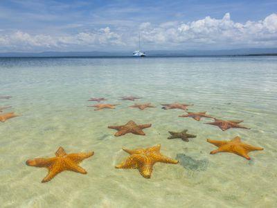 Panama-Bocas-del-toro-Seesterne