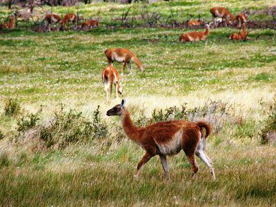 Parque Nacional Patagonia (7)