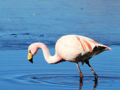 bolivien salar de uyuni flamingo 1