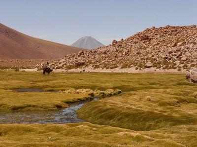 Chile Atacama Wüste1