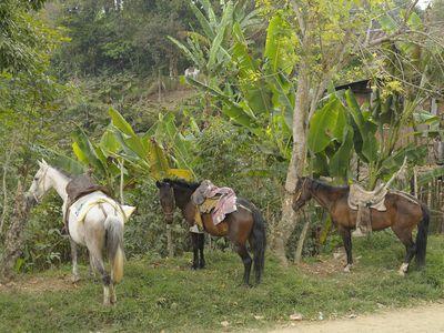 Kolumbien San Agustin Pferde