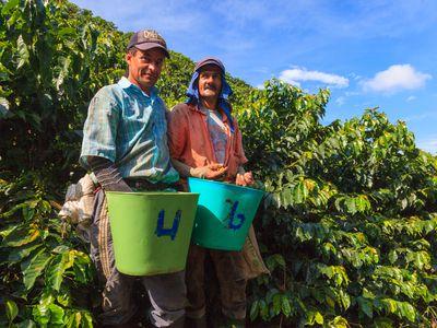 Kolumbien Kaffeezone Männer bei der Ernte