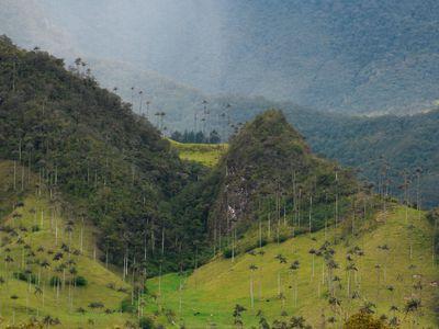 Kolumbien Kaffeezone Wachspalmen 2