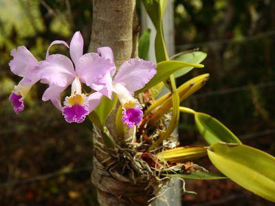 Kolumbien Orchideen