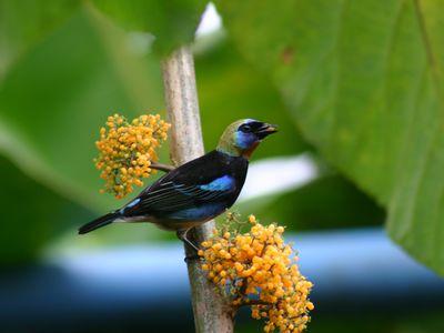 Costa Rica einzigartige Vogelwelt