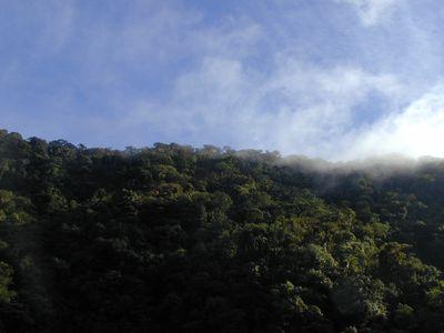 Costa Rica Braulio Carillo Nationalpark 3