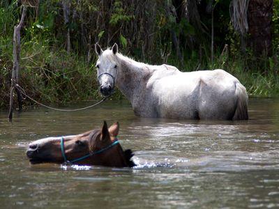 Brasilien Lencois Pferde