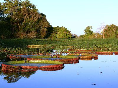 Brasilien Amazonas Fluss
