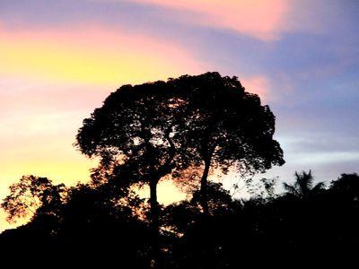 Brasilien Amazonas Sonnenuntergang