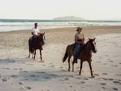 Brasilien Florianopolis Pferde