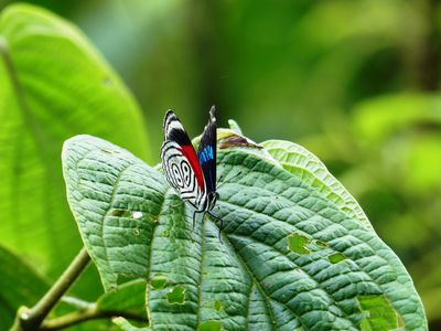 Brasilien Foz do Iguazu Schmetterling