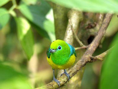 Brasilien Foz do Iguazu Vogel