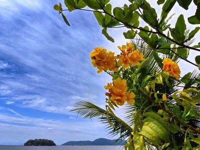 Brasilien Paraty Blumen
