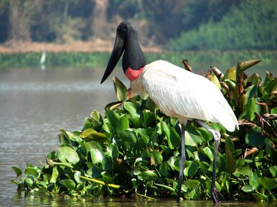 Brasilien Süd Pantanal Wildnis
