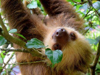 Costa-Rica-Faultier