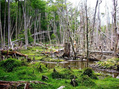 Argentinien Feuerland Nationalpark Wanderung