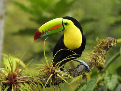 Costa Rica Naturjuwel uebersicht