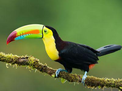 Costa Rica Naturjuwel