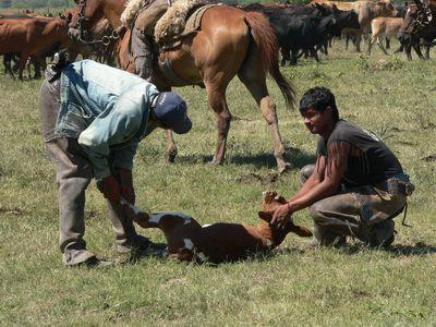 Argentinien Estancia Impfen