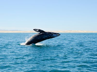Mexiko Baja California Wal iStock 96781668