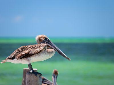 Mexiko Isla Holbox Tierbeobachtungen iStock 121255307