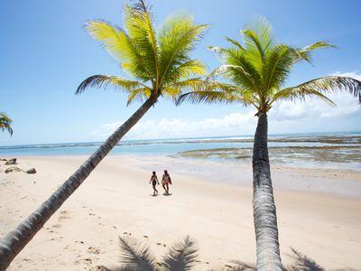 Brasilien Strand Palmen