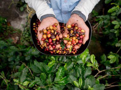 Kolumbien Kaffee iStock 538899198