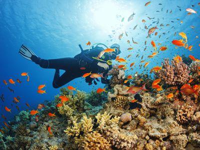 Ecuador Galapagos Taucher iStock 498283106