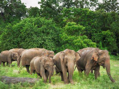 Sri Lanka Udawalawe Elefantenherde Safari