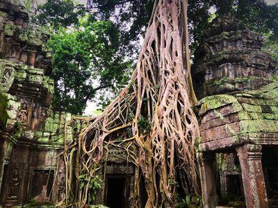 Kambodscha Angkor Ta Prohm Urwald Tempel bewachsen mystisch